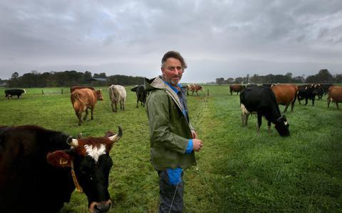 Met zijn land ingedeeld in perceeltjes krijgen de koeien van Anne Koekkoek uit Harlingen genoeg gras binnen en gedijt zijn grasland.