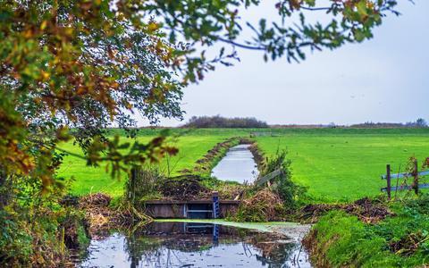 Veenweidegebied in de omgeving van Akmarijp.
