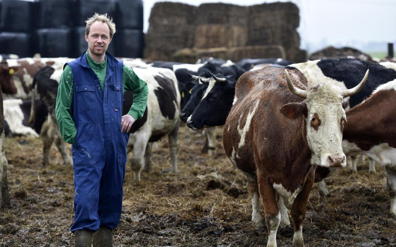 Jaring Brunia met zijn koeien in Raerd.
