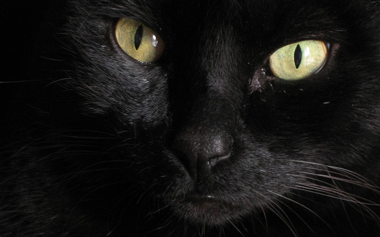 Zwarte kat.