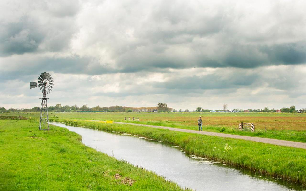 In het gebied ten noorden van Earnewâld beheert Stichting Weideleven 78 hectare weidevogelland volgens haar eigen methode. Het aantal gruttopaartjes ging in drie jaar van nul naar negentig.