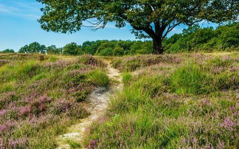 """Auke van der Woud: ,,Het Nederlandse landschap toont van oudsher een enorme verscheidenheid, we moeten de regionale karakteristieken en mogelijkheden goed in de gaten houden en zo mogelijk versterken."""""""