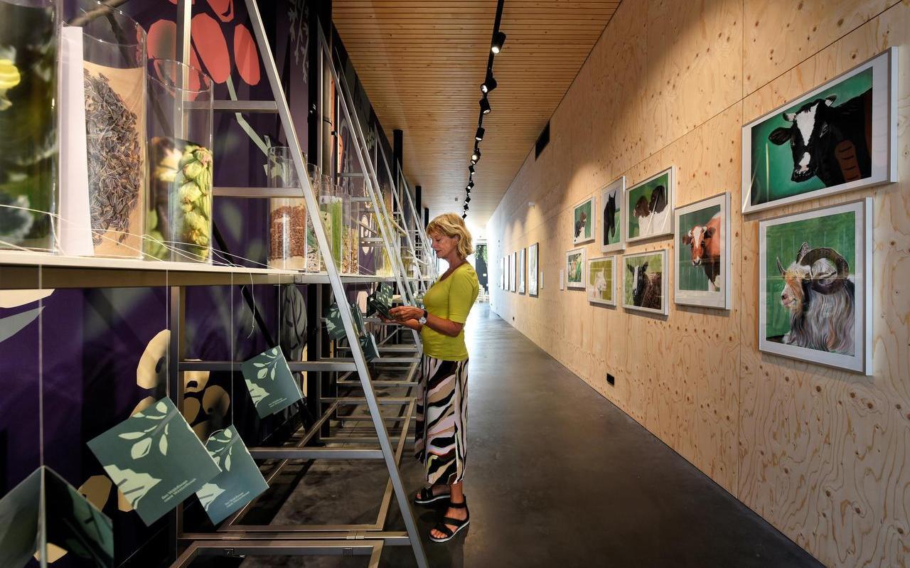 Een bezoekster bekijkt de tentoonstelling over oude Friese fruitrassen en dieren. De expositie is ingericht in Obe, de tentoonstellingsruimte op het Oldehoofsterkerkhof in Leeuwarden.