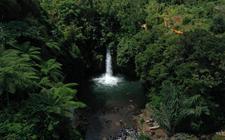 Regenwoud in Indonesië. Elk jaar wordt zeven miljoen hectare natuurlijk bos getransformeerd voor ander landgebruik.