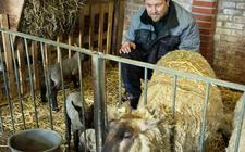 Pieter Jan Visser uit Westergeest fokt schapen.