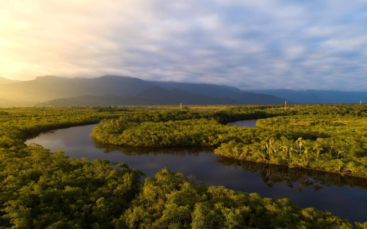 Het Amazoneregenwoud in Zuid-Amerika wordt ernstig bedreigd door illegale houtkap.