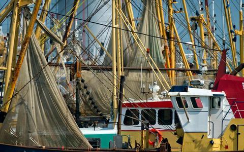 De haven van Lauwersoog met garnalenkotters.