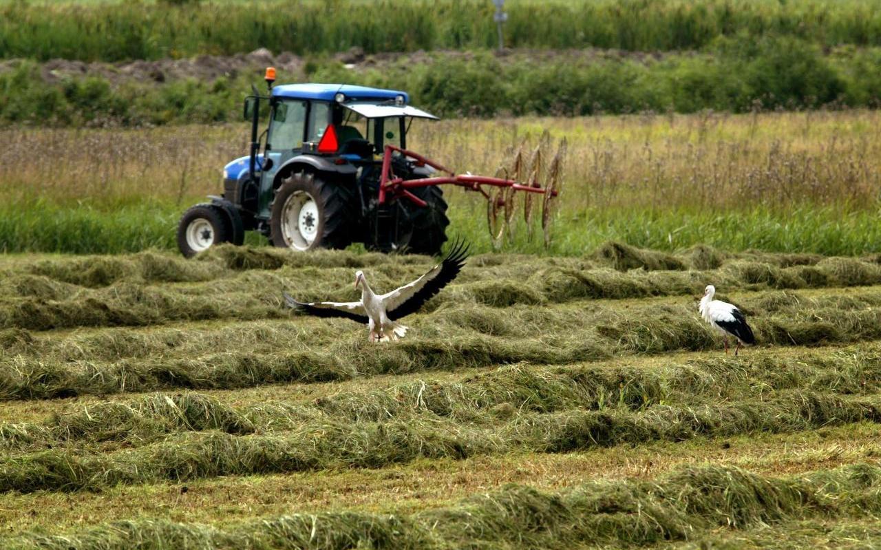 Boeren in Fryslân willen los met de regiodeal.