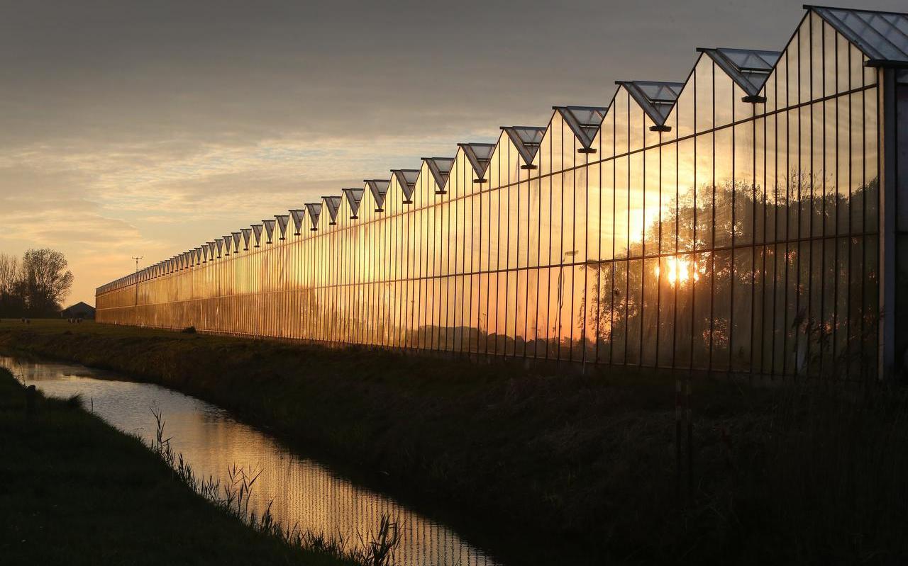 Tuinbouwkassen bij Berltsum,in dit deel van de provincie een belangrijke Economische tak.