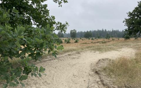 Je kunt heerlijk dwalen over de heide en de zandverstuivingen van het Drents-Friese Wold.