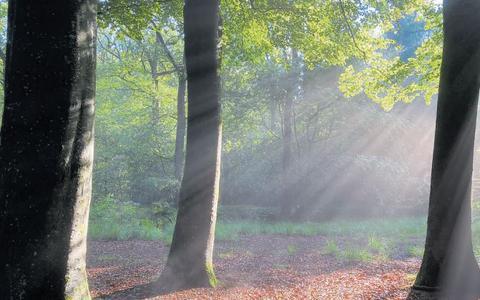 De betoverende sfeer van het bos.
