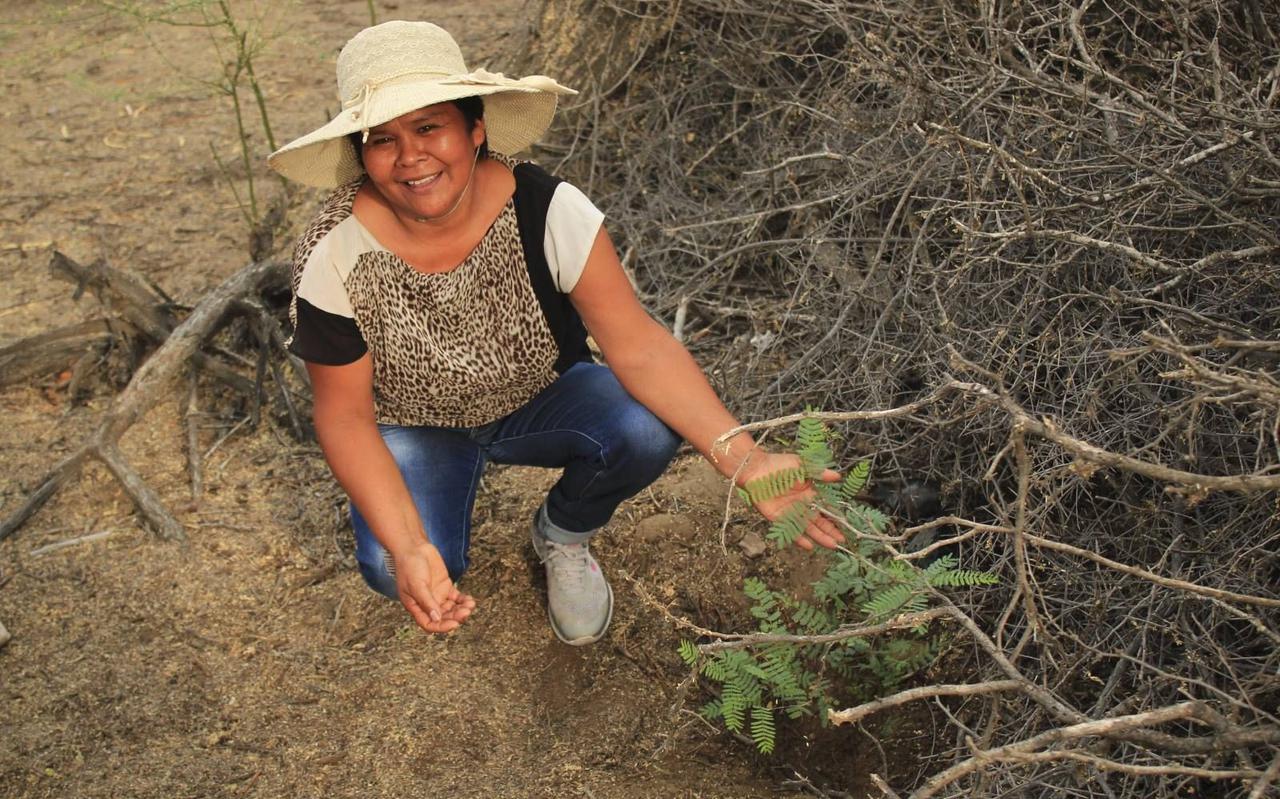 Iemand van de lokale bevolking in Peru plant bomen aan in de droge kustzone van het Zuid-Amerikaanse land.