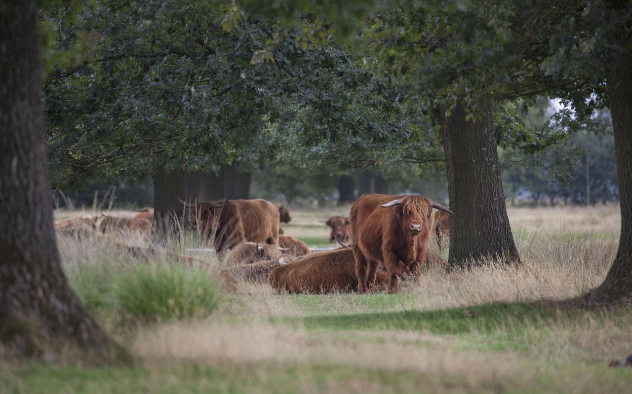 Reddingsplan biodiversiteit op de Doldersumse hei in het Drents-Friese Wold.