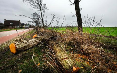 Het areaal bomen in Fryslân neemt af.