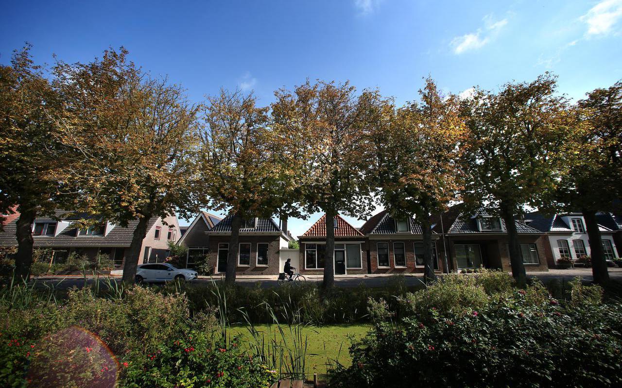 Zieke kastanjebomen aan de Stadhoudersweg in Sint Annaparochie.
