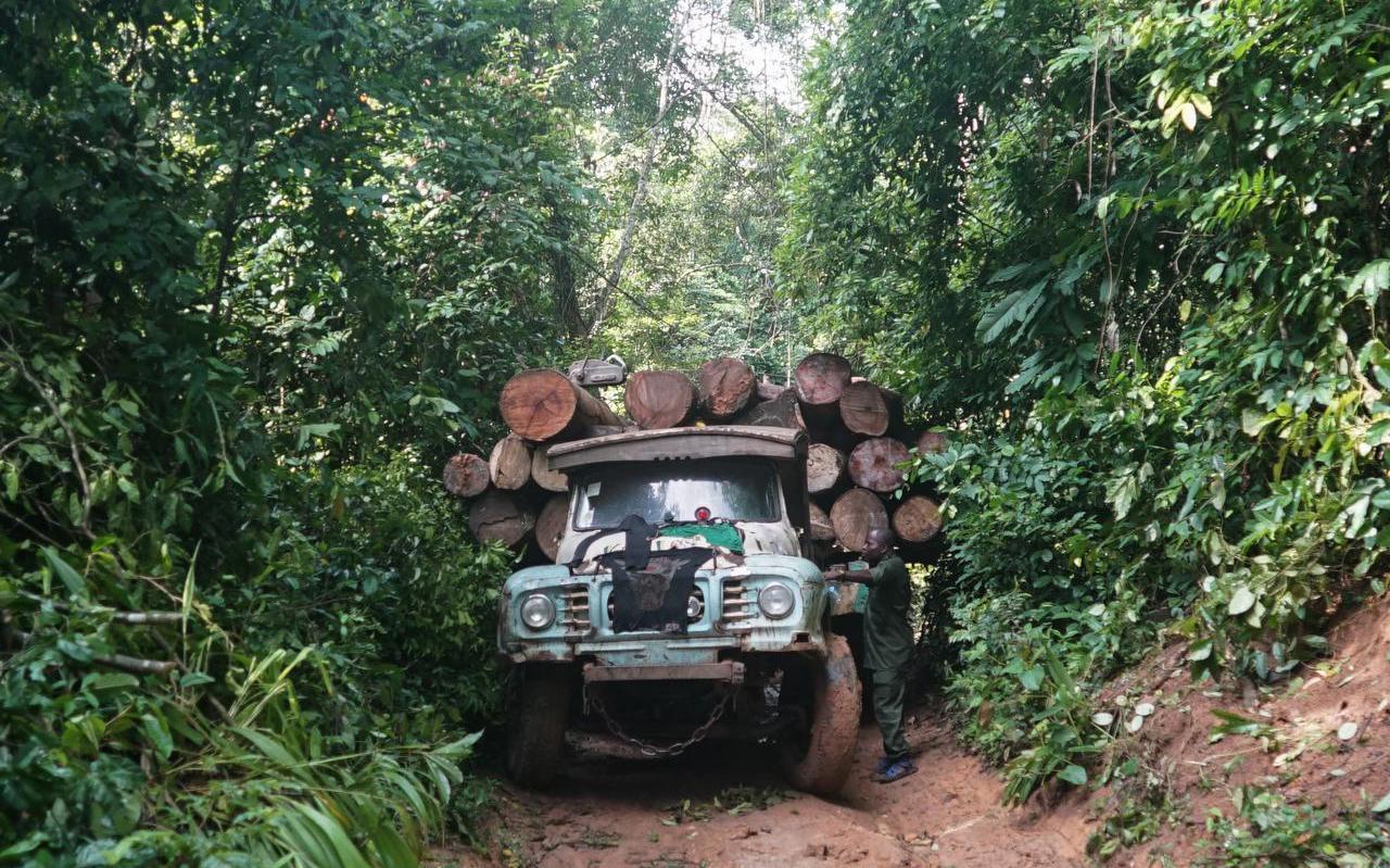 Boskap in een regenwoud in Nigeria. Volgens de Verenigde Naties neemt de ontbossing in Nigeria alarmerende vormen aan.